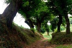 Chemin dans le bois Photographie stock libre de droits