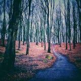 Chemin dans le forrest Photo libre de droits