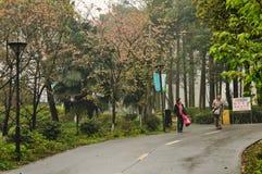 Chemin dans le jardin botanique Photos stock