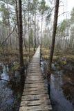 Chemin dans le marais Image libre de droits