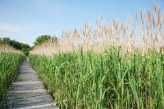 Chemin dans le marais Photographie stock libre de droits