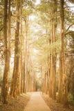Chemin dans le vintage de parc rétro Image libre de droits