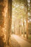 Chemin dans le vintage de parc rétro Photographie stock