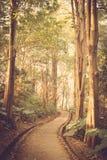 Chemin dans le vintage de parc rétro Photographie stock libre de droits