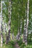 Chemin dans les bois Photo stock