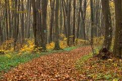 Chemin dans les bois Image stock