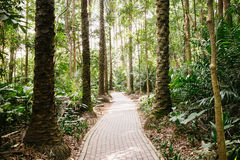 Chemin dans les bois Images stock