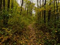 Chemin dans les bois Photos stock