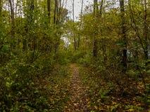 Chemin dans les bois Photos libres de droits