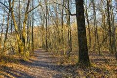 Chemin dans les bois Photographie stock libre de droits
