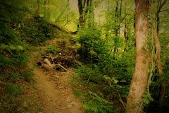 Chemin dans les bois photographie stock