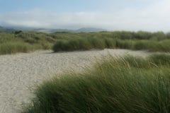 Chemin dans les dunes avec l'herbe Image libre de droits