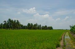Chemin dans un domaine de riz photos stock