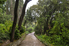 Chemin dans un jardin botanique Image libre de droits