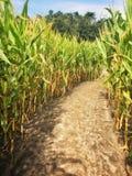 Chemin dans un labyrinthe de champ de maïs image libre de droits