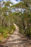 Chemin dans une forêt Photo libre de droits