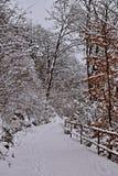 Chemin dans une forêt d'hiver photos libres de droits