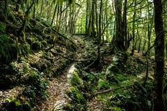 Chemin dans une forêt de montagne près de Sotchi Photo stock