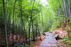 Chemin dans une forêt en bambou Image libre de droits