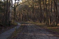 Chemin dans une forêt en Hollandes Image libre de droits
