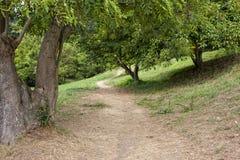 Chemin dans une forêt Image stock