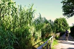Chemin de bicyclette sur l'aqueduc romain Photo stock
