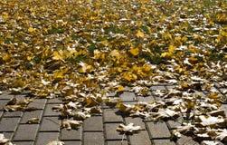 Chemin de brique, herbe, Autumn Leaves Photos stock