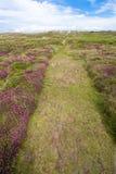 Chemin de bruyère Image libre de droits