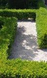 Chemin de buis dans le jardin Photos libres de droits