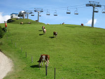 Chemin de câble et vaches Photographie stock libre de droits