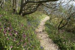 Chemin de côte de Guernesey près de la baie de marbre avec des fleurs de ressort. Photos stock