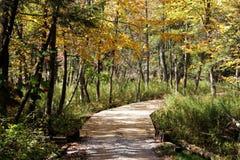Chemin de chariot de terrain de golf dans l'automne Images stock