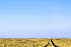 Chemin de chemin de terre dans un paysage de champ de blé en été Photographie stock libre de droits