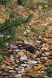 Chemin de chute dans une forêt Photo libre de droits