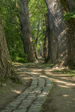 Chemin de conte de fées dans une forêt avec le soleil brillant  images stock