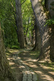Chemin de conte de fées dans une forêt avec le soleil brillant  photographie stock libre de droits