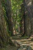 Chemin de conte de fées dans une forêt avec le soleil brillant  photos libres de droits