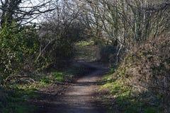 Chemin de enroulement avec des arbres gardant l'un ou l'autre de côté photo stock