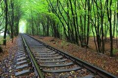 Chemin de fer dans la forêt Image libre de droits