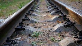 Chemin de fer dans la forêt clips vidéos