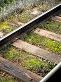 Chemin de fer et nature Photo stock
