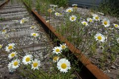 Chemin de fer oublié Image libre de droits