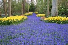 Chemin de fleur Images libres de droits