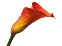 chemin de Fleur-découpage Photos libres de droits