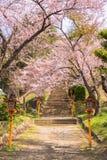 Chemin de fleurs de cerisier Images libres de droits