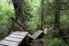 Chemin de forêt humide Image libre de droits