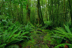 Chemin de forêt humide Photographie stock
