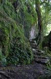 Chemin de forêt humide Photo stock