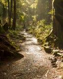 Chemin de forêt tropicale Image stock