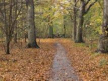 Chemin de Forrest à déclencher Photo libre de droits